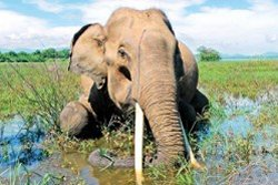 Image result for mugalan elephant